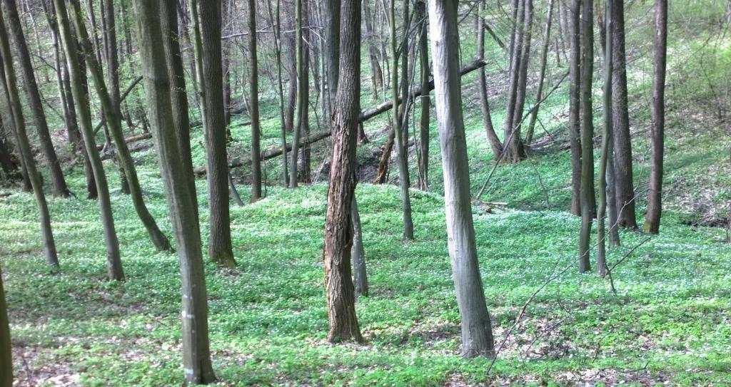 Солнечный весенний лес