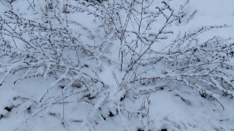 Зима в марте